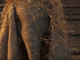 Dumbo - Teaser Trailer