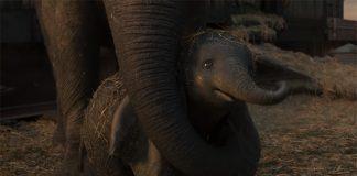 Trailer internacional de Dumbo live-action